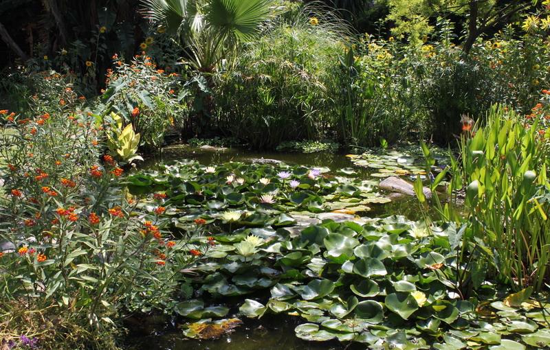 Biotopo casero 8 for Imagenes de estanques caseros