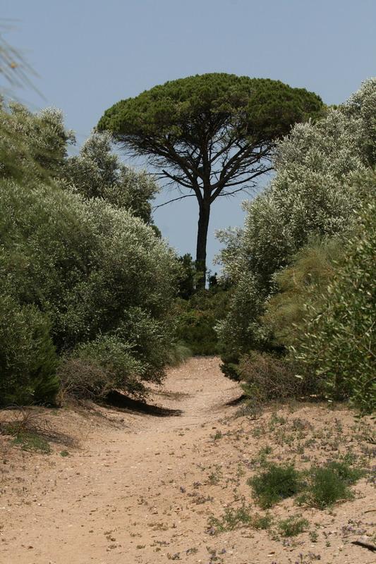 Parque Natural Bahía de Cádiz y Parque Natural de Doñana